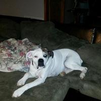 Adopt A Pet :: Rico Buck - Harrah, OK