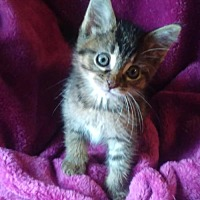 Adopt A Pet :: Candace @ Canton PetSmart Habitat on Michigan Ave - Taylor, MI