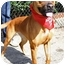 Photo 1 - Boxer Mix Dog for adoption in Los Angeles, California - HAILEE STEINFELD