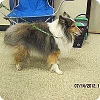 Adopt A Pet :: Tippy - apache junction, AZ