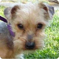 Adopt A Pet :: Rango - Plainfield, CT