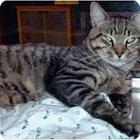 Adopt A Pet :: Seymour - New Port Richey, FL