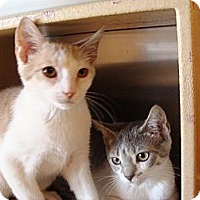 Adopt A Pet :: Starsky and Hutch - Albany, NY