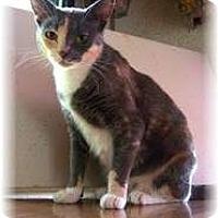 Adopt A Pet :: Liberty - Shelton, WA