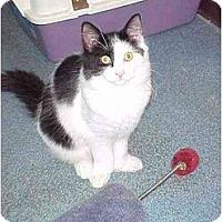 Adopt A Pet :: Brewskie - Quincy, MA