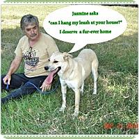Adopt A Pet :: Jasmine- - Franklinton, NC