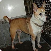 Adopt A Pet :: CHEENO - Wilmington, NC