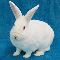 Other/Unknown Mix for adoption in Los Angeles, California - Magdalena