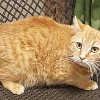 Adopt A Pet :: Mario - Americus, GA