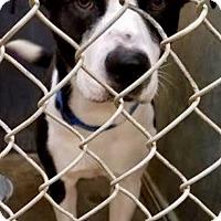 Adopt A Pet :: Jasper - ADOPTED! - Zanesville, OH