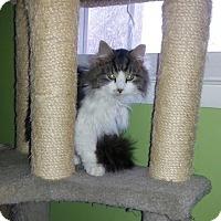 Adopt A Pet :: Mimi - Fairfax, VA