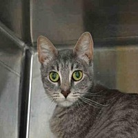Adopt A Pet :: AURORA - Rancho Cucamonga, CA