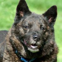 Adopt A Pet :: Mya *Foster* - Glen Allen, VA