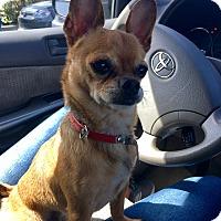 Adopt A Pet :: Bruce - Homestead, FL