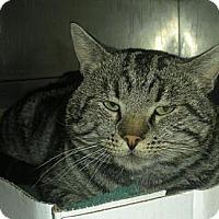 Adopt A Pet :: Tom Cat - Irvine, CA