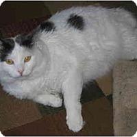 Adopt A Pet :: Marshmallow - North Boston, NY
