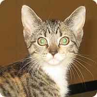 Adopt A Pet :: BLAIR - Hamilton, NJ