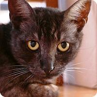 Adopt A Pet :: Adorable Tinker - Laguna Woods, CA