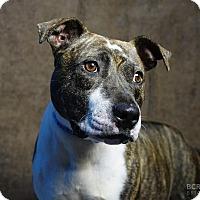 Adopt A Pet :: FLORA - Cliffside Park, NJ