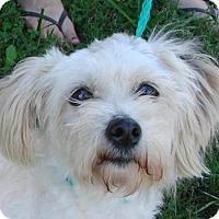 Adopt A Pet :: Opal - Erwin, TN