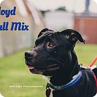 Adopt A Pet :: Lloyd - Cheney, KS