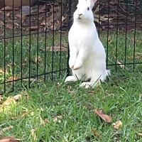 Adopt A Pet :: Zapp - CC's baby - Baton Rouge, LA