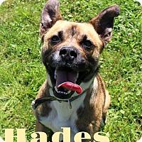 Adopt A Pet :: Hades - Melbourne, KY