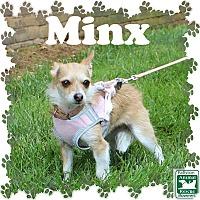 Adopt A Pet :: Minx - Fallston, MD