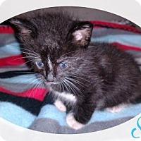 Adopt A Pet :: SPOT - Lawton, OK
