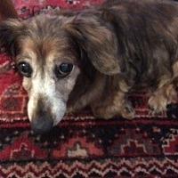Adopt A Pet :: Luna - Pearland, TX