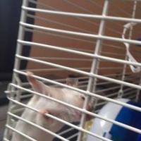 Adopt A Pet :: Beck - Edmonton, AB