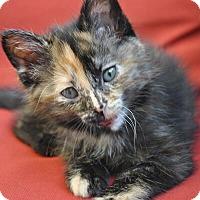 Adopt A Pet :: Janina - Mississauga, Ontario, ON