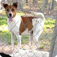 Adopt A Pet :: Heaven - Albemarle, NC