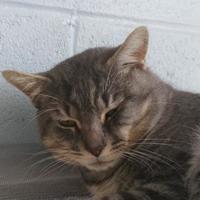 Adopt A Pet :: 653053 - Bakersfield, CA
