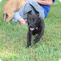 Adopt A Pet :: Peppermint Patty - Harmony, Glocester, RI