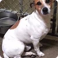 Adopt A Pet :: Elston - Stoneham, ME