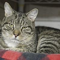 Adopt A Pet :: Jackson - Whitehall, PA