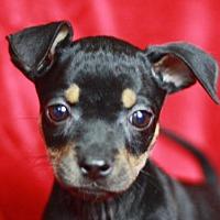 Adopt A Pet :: Darby - Bedminster, NJ