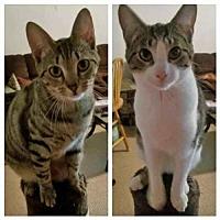 Adopt A Pet :: Kailey and Kiera - Arlington, VA