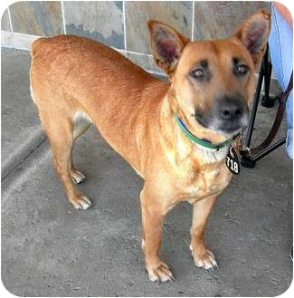 Shepherd (Unknown Type) Mix Dog for adoption in Vista, California - Baby