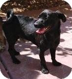 Maltese/Dachshund Mix Dog for adoption in Las Vegas, Nevada - N's Natalie