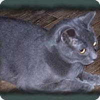 Adopt A Pet :: Prince - Brookville, IN