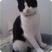 Adopt A Pet :: Jasmine - Washington Terrace, UT