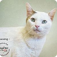 Adopt A Pet :: Channing - Phoenix, AZ