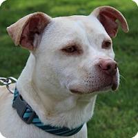 Adopt A Pet :: Andy - Mount Juliet, TN
