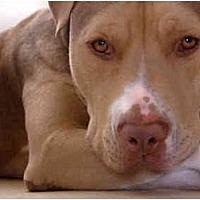 Adopt A Pet :: Coffee - Santa Monica, CA