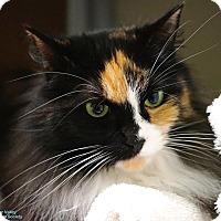 Adopt A Pet :: Lassie - Mission, BC