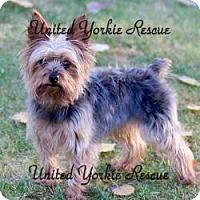 Adopt A Pet :: Tyson - Hobart, WI