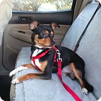 Adopt A Pet :: TURBO - Jacksonville, FL