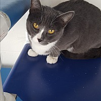 Adopt A Pet :: Hunter - Middletown, NY